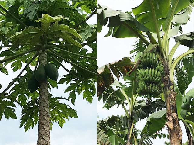 Fruity Blog from Luwero